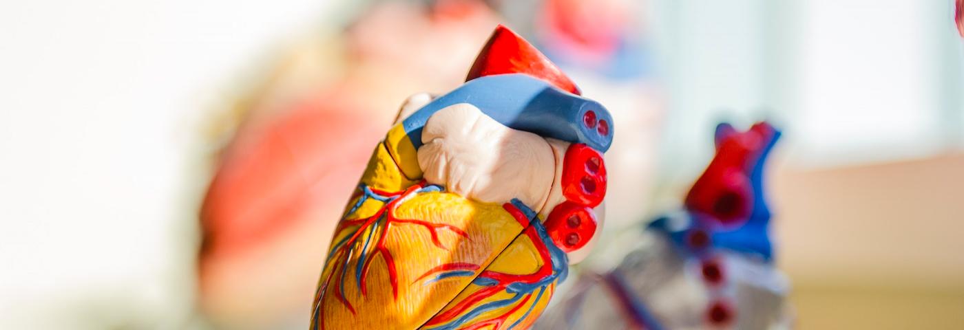Les maladies cardiovasculaires et l'oxyde nitrique