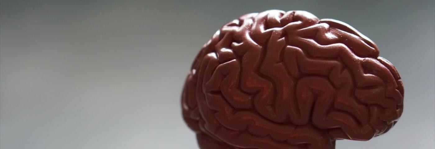 Une pharmacie dans notre cerveau