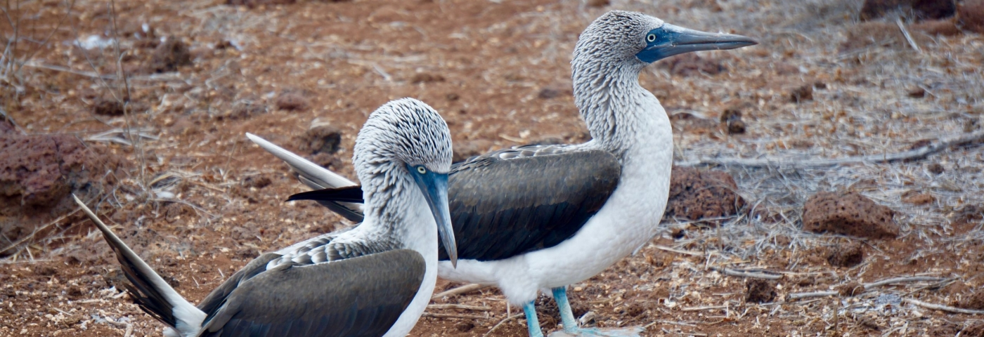 Les Îles Galapagos fascinent toujours
