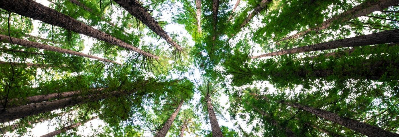 La forêt qui soigne et qui soignera toujours