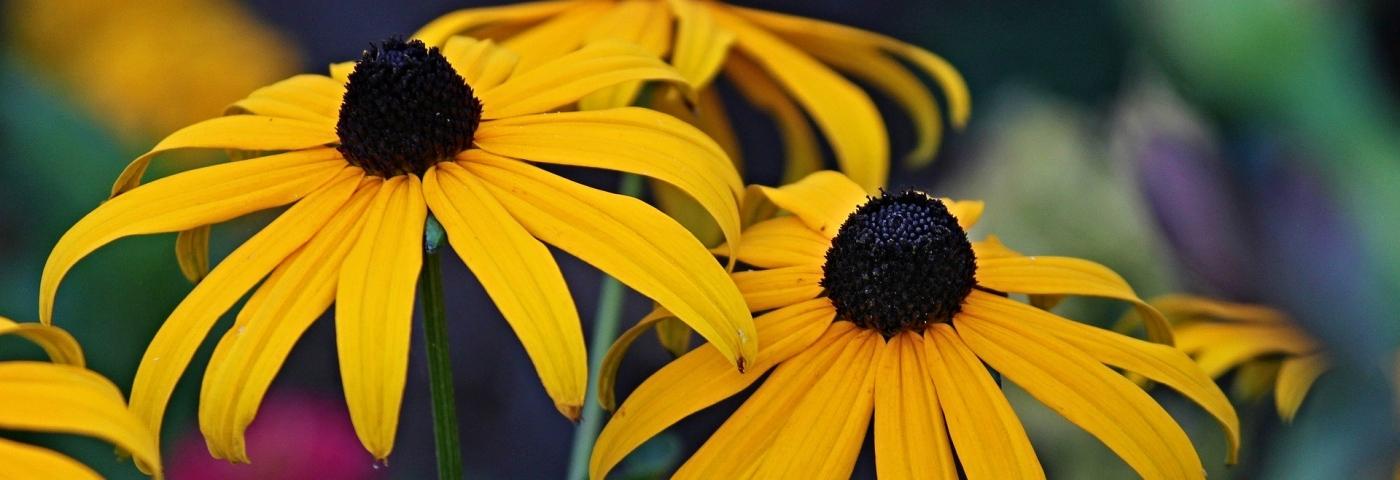 Plantes pour éviter et soulager les maux du printemps