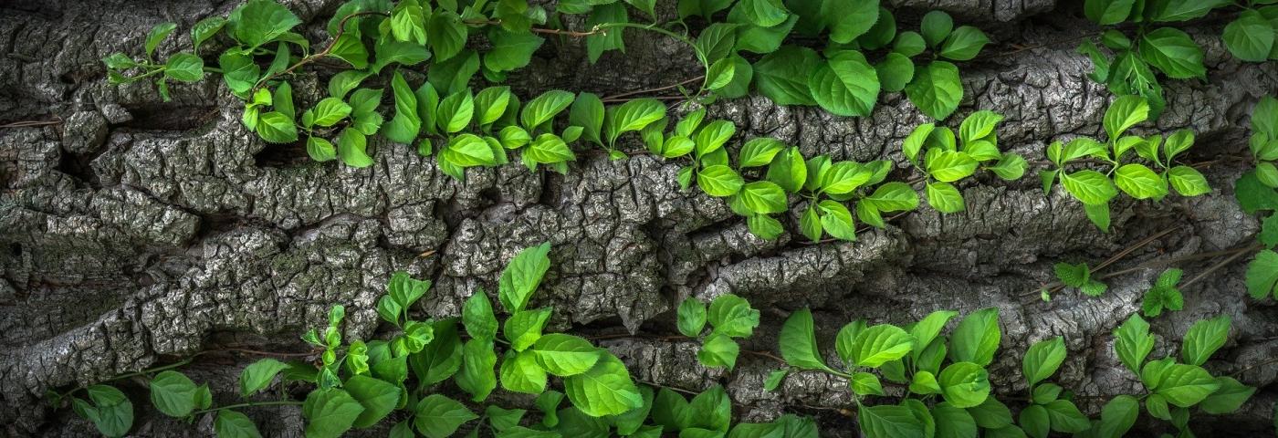Les Low-Tech : des solutions technologiques qimples, pour un avenir plus vert