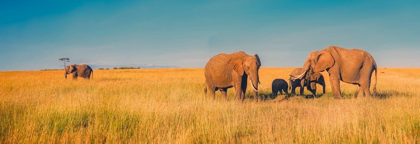 L'Afrique du Sud, du safari jusqu'à la découverte des vignobles