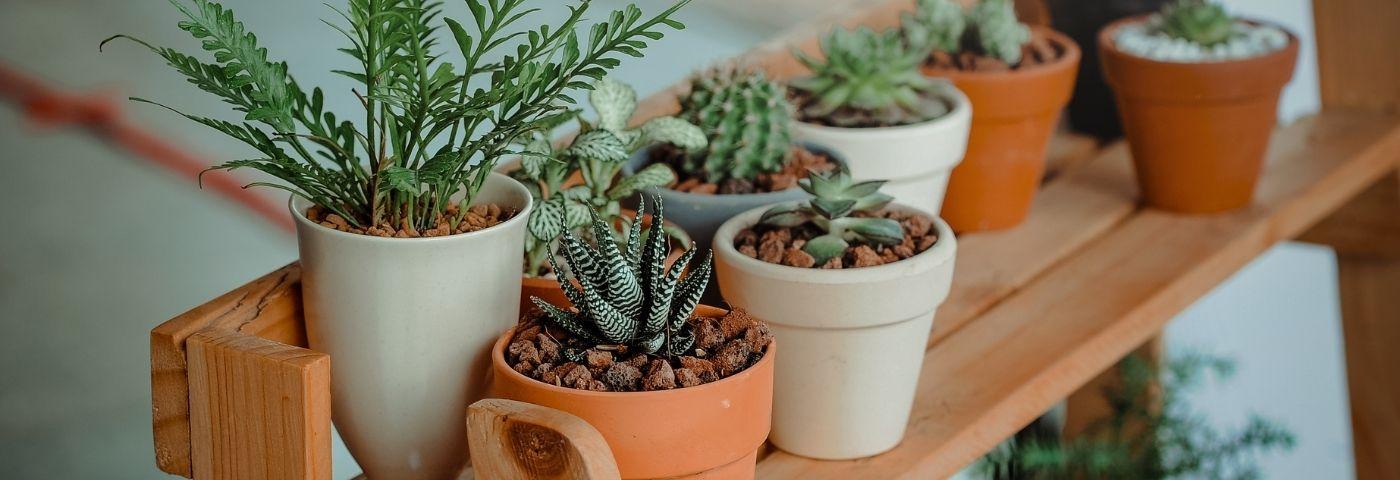 Herbes et trucs naturels utiles pour des nerfs solides