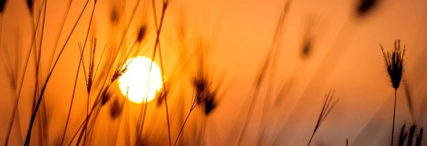 L'exposition au soleil, pour faire la lumière sur l'épigénétique